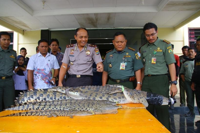 press release kasus perburuan buaya muara tulang bawang